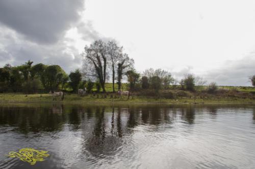 Irlande 05-2013-36